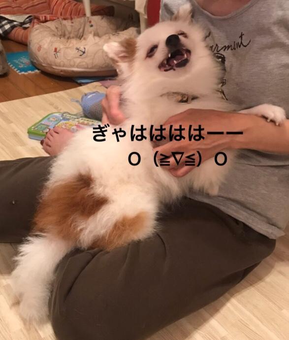 fc2blog_20190805150459ca3.jpg