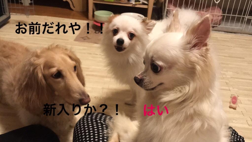 fc2blog_201908140443158c6.jpg