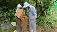 「どこにハチミツがあるんですか?」(20190808)