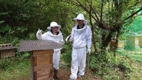 M君はミツバチ見た事ないんだっけ?(20190808)