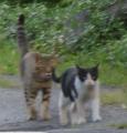 004猫二匹