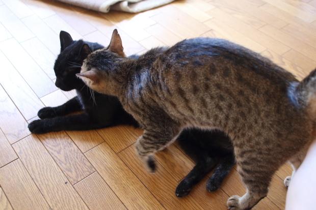 世界猫の日3