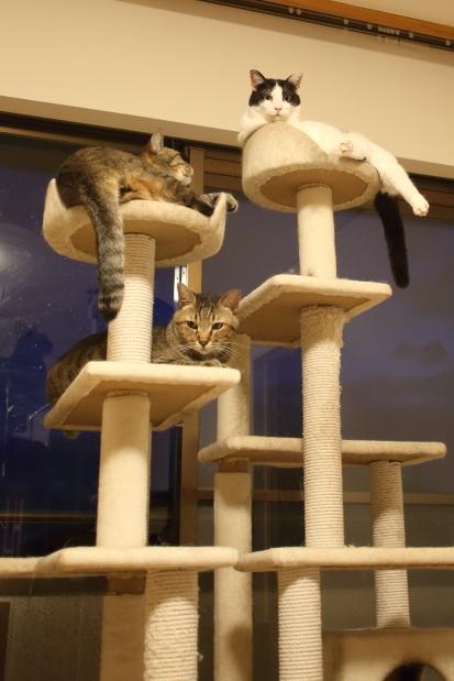 世界猫の日6