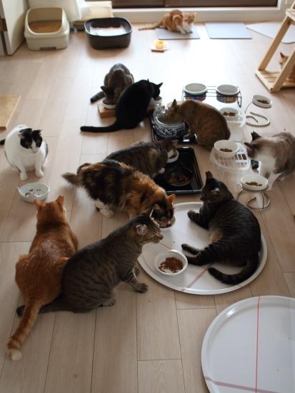 世界猫の日9