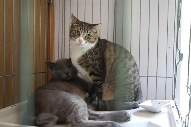 世界猫の日8