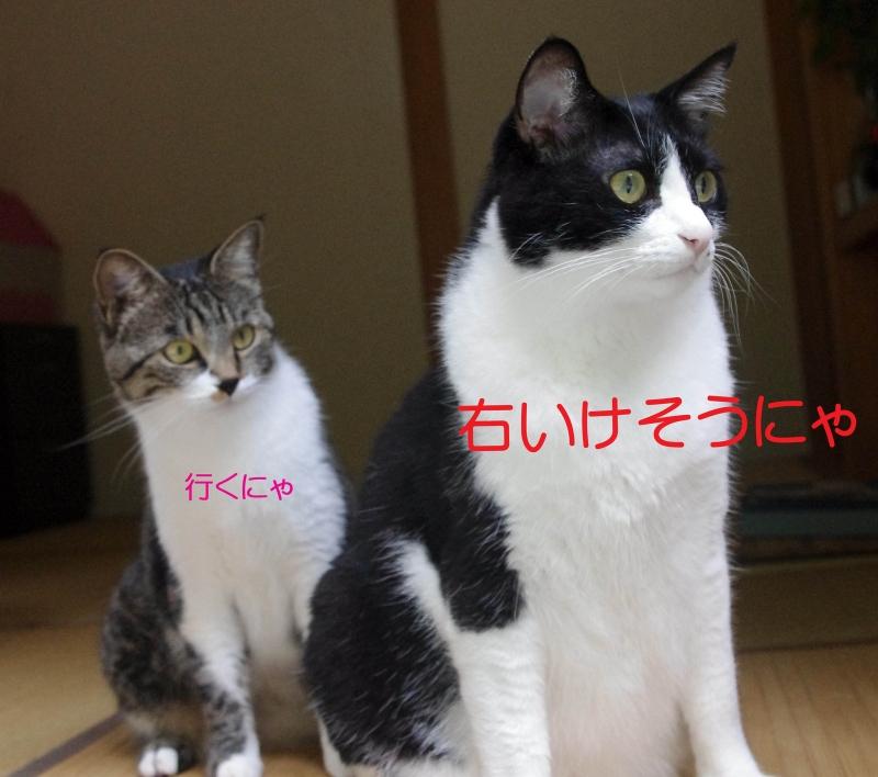 imgp2840_edited1.jpg