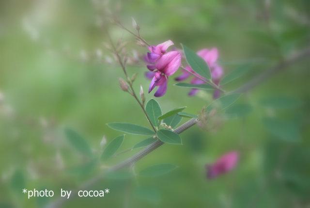 DSC_0106 2012-06-20 15-10-11