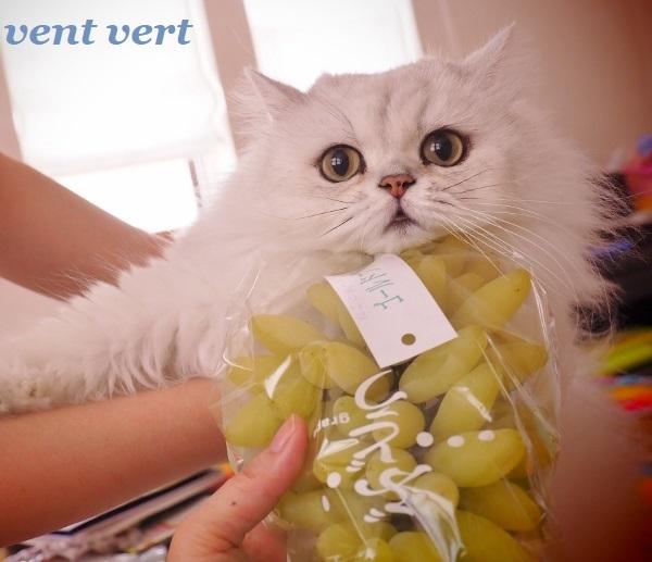 葡萄です6