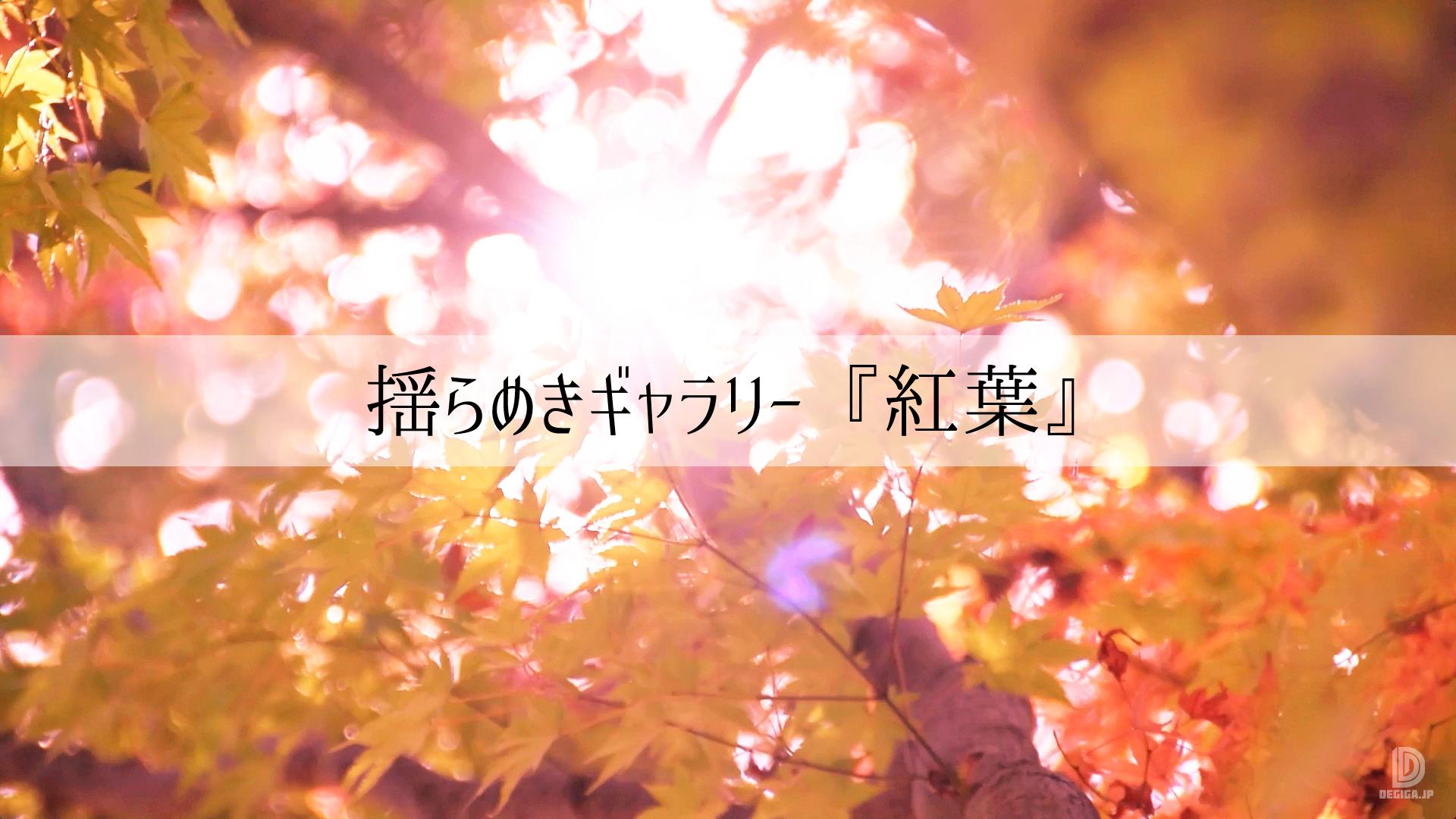 新作動画素材『揺らめきギャラリー・紅葉』デモ表紙
