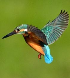 小鳥遊(ht)