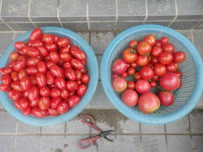 収穫2_19_07_20