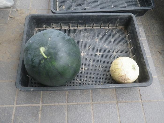 収穫4_19_07_21