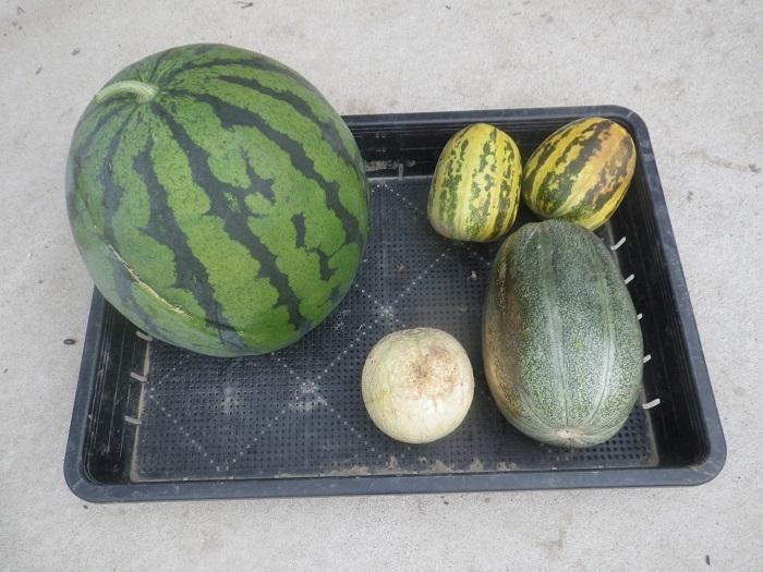 収穫2_19_07_25