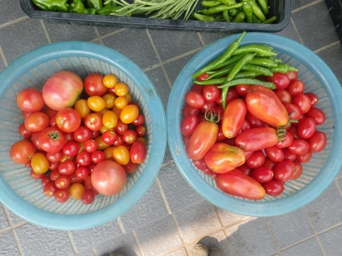 収穫3_19_08_03
