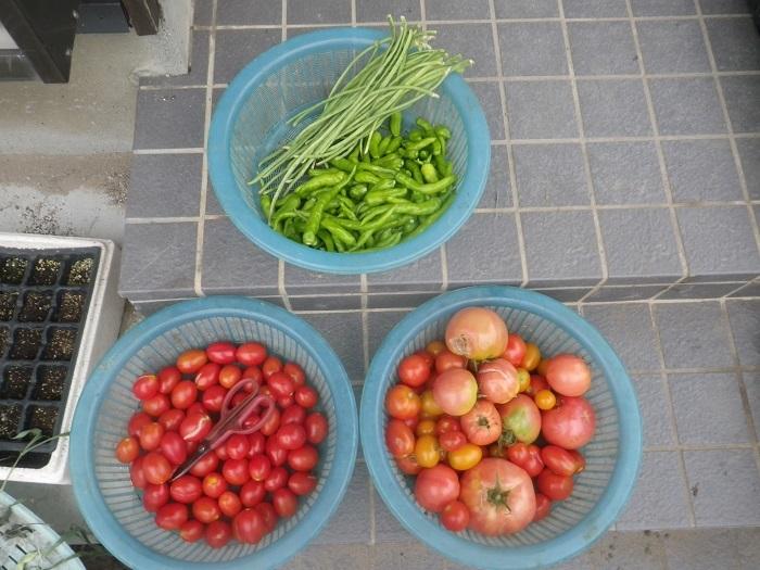 収穫2_19_08_04