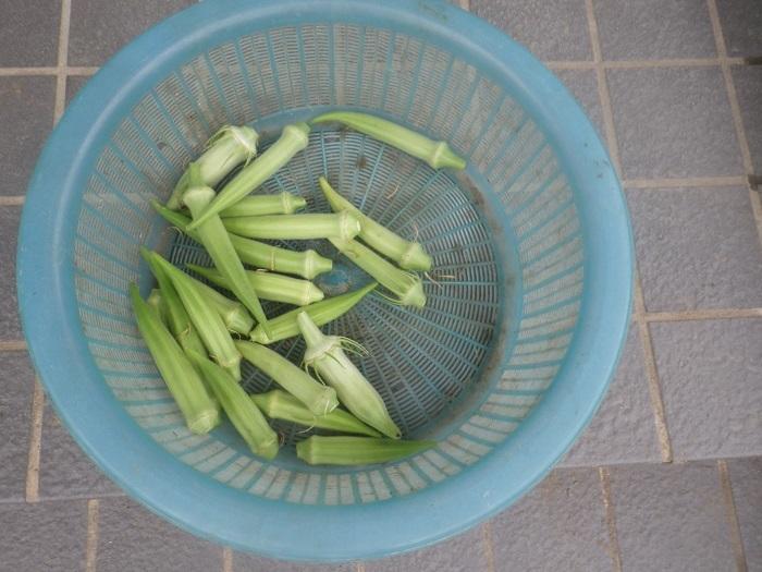 収穫3_19_08_04