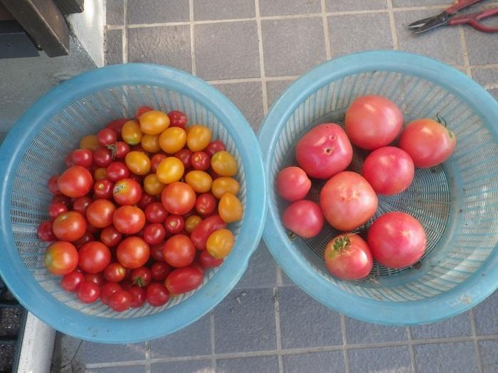 収穫2_19_08_10