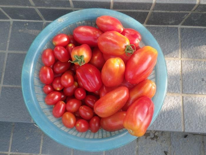 収穫2_19_08_11