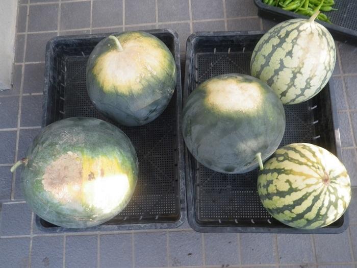 収穫2_19_08_12