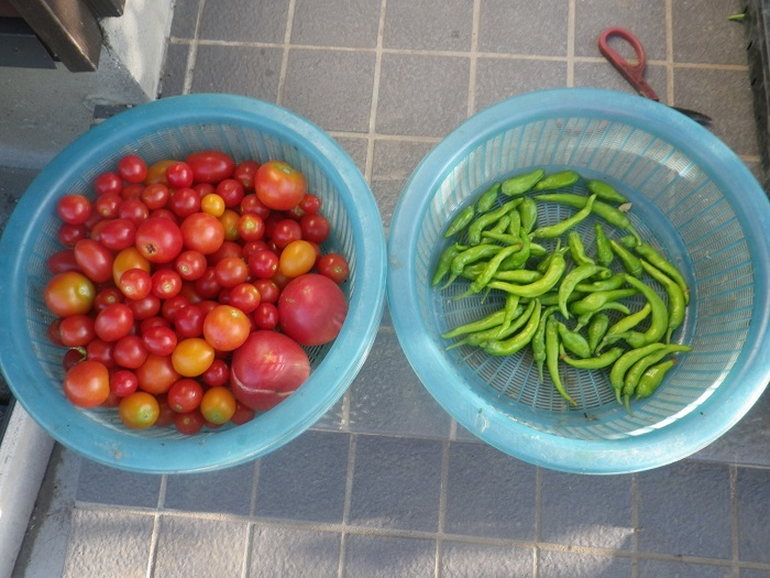 収穫2_19_08_13