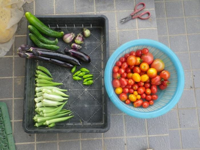 収穫1_19_08_15