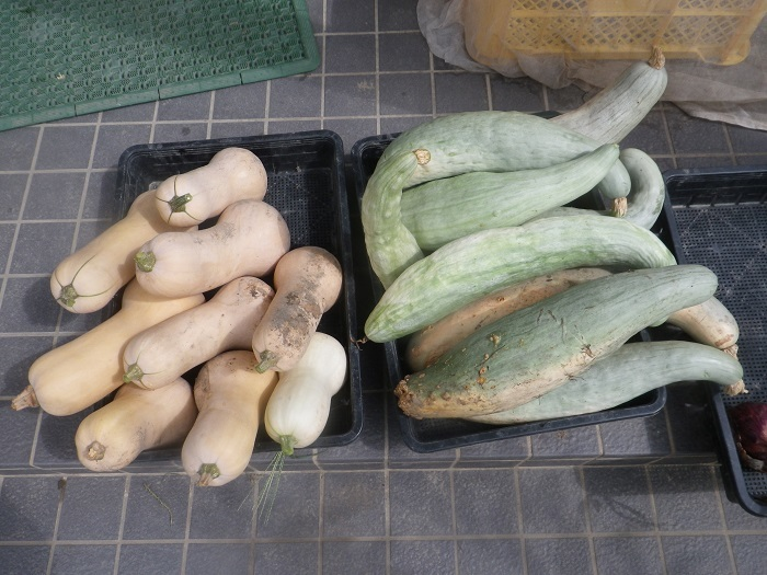 収穫3_19_08_15