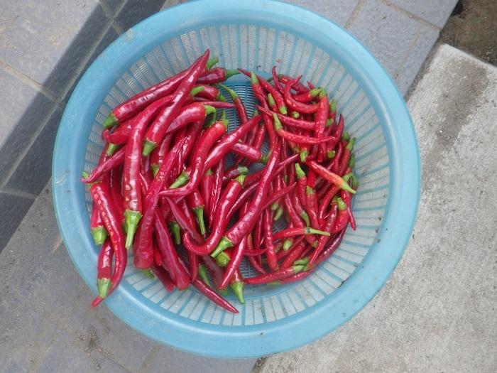 収穫3_19_08_25