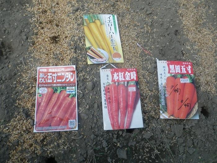 ニンジン5_19_08_25