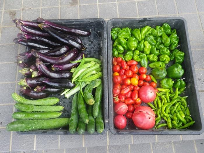収穫1_19_08_31