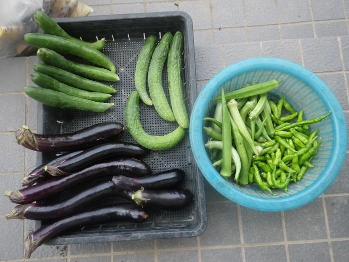 収穫1_19_09_04