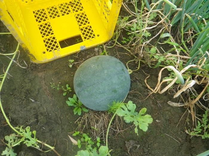 収穫2_19_09_04