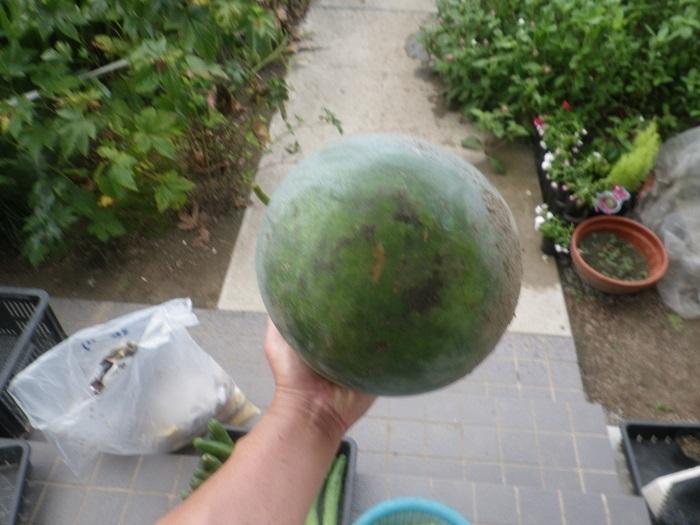 収穫3_19_09_04