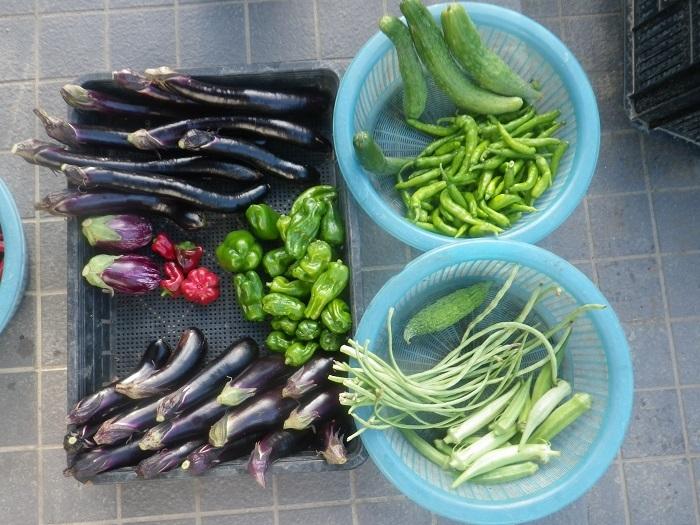収穫19_09_08