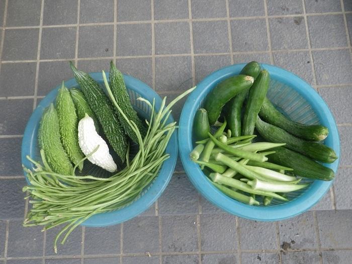 収穫19_09_14