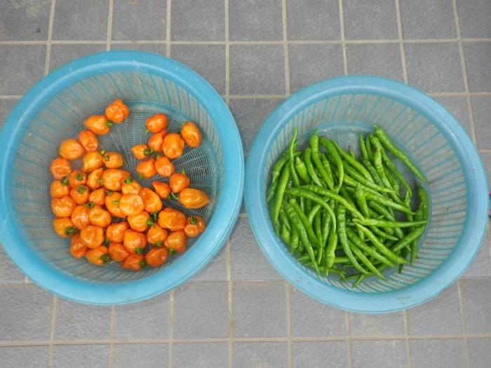 収穫1_19_09_22