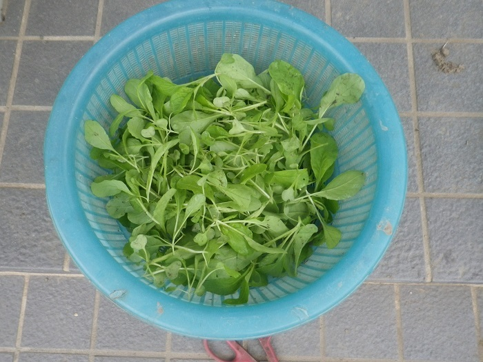収穫2_19_09_22