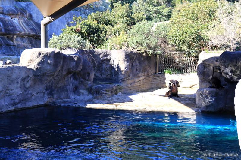 タロンガ動物園 シドニー フェリー