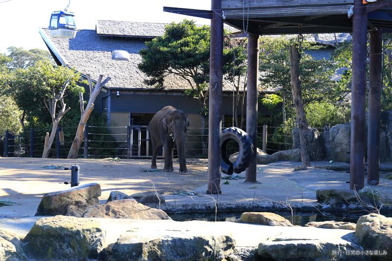 タロンガ動物園 シドニー ぞう