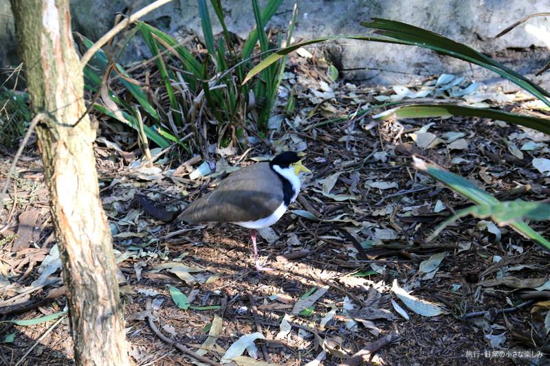 タロンガ動物園 シドニー