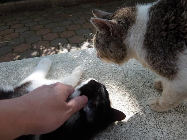 猫9,13