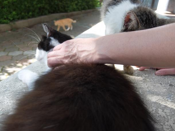 猫9,12,13