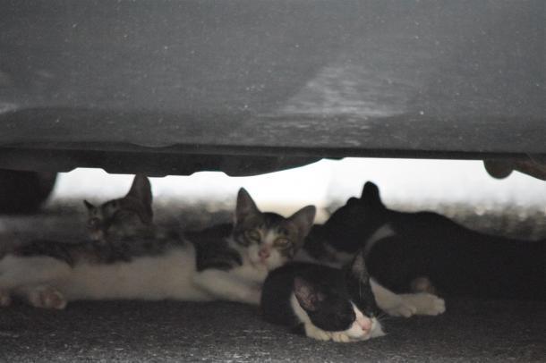 猫18,19,20,21