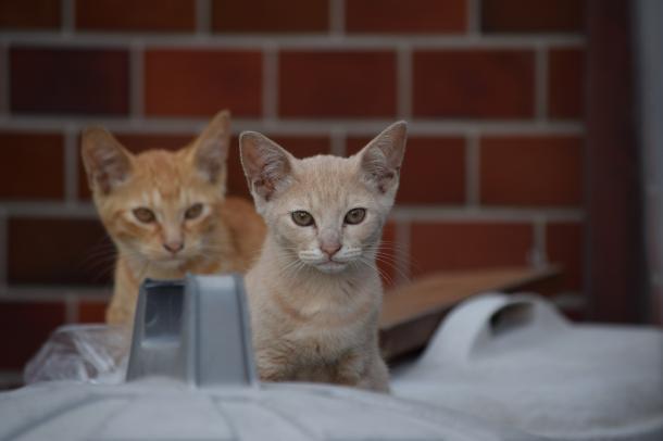 猫31,32