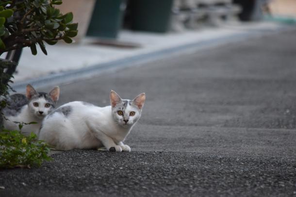 猫3,31