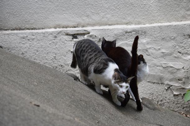猫7,8,9