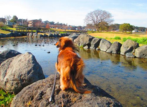 river-p11.jpg