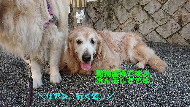 DSC_1195.jpg
