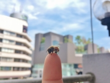 原宿ミツバチ