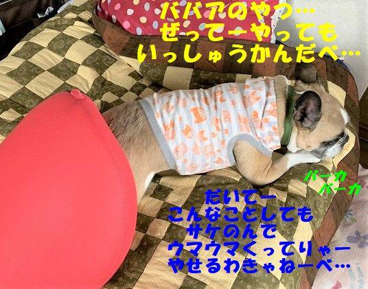 IMG_3294_20190712083351489.jpg