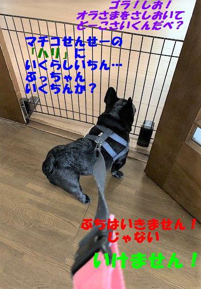 IMG_3723_20190723114503407.jpg